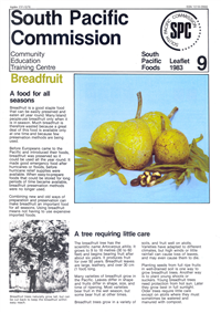 Breadfruit: a food for all seasons